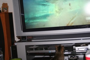 HD tv szolgáltatás