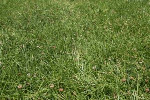 legelő fűmagkeverék